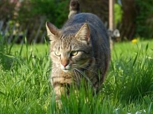 cat_grass