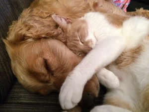 cat and dog cuddle
