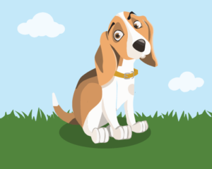 What your dog's poop can tell you about his health