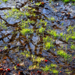 contaminated puddle