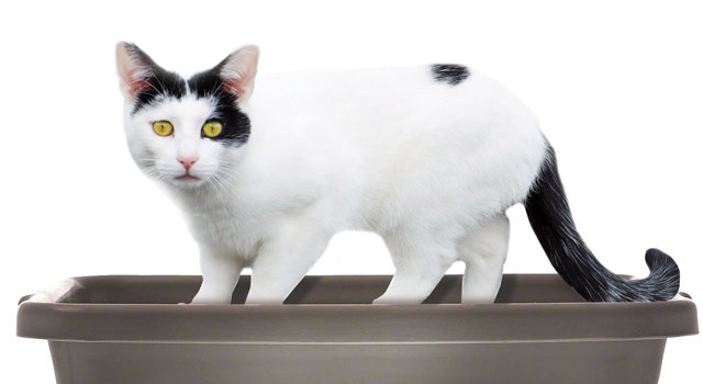Why cats pee outside the litter box – Medical vs. Behavioral