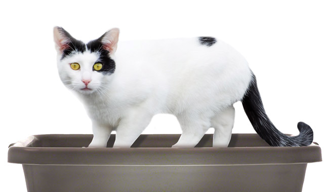 Why cats pee outside the litter box - Medical vs. Behavioral