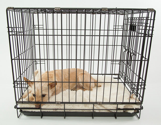 Pet Safety By Crating Your Dog