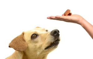 heartworm preventatives for dogs