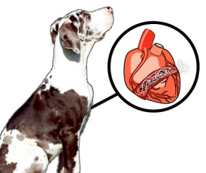 services heartworm disease dogs