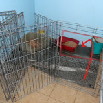 dog pen with kitty litter
