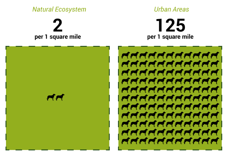 How Much Is A Mile >> So Just How Much Dog Poop Is In Asheville