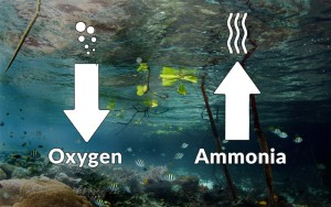 Ammonia in our waters
