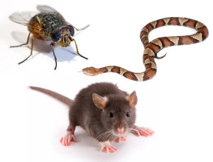 Rodents & Pests
