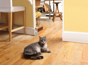 how to know if your cat is spraying all over house