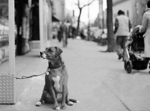 dog-nyc-1970s