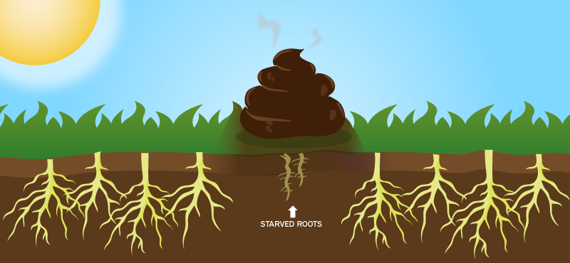 dog-poop-kills-roots