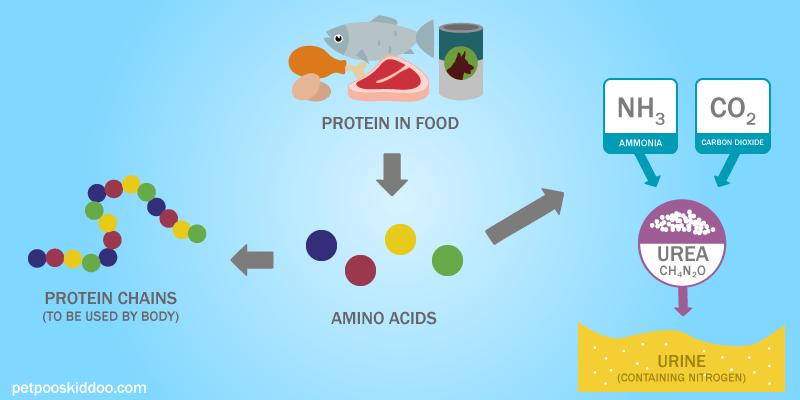 nitrogen-protein-process