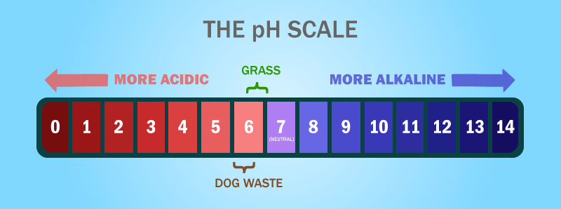ph-balance-dogs-grass