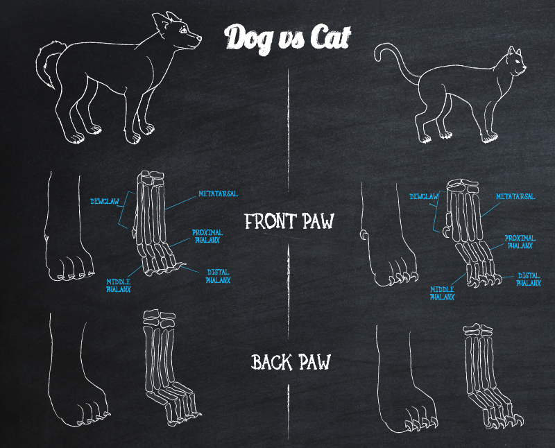 Dog vs Cat Paws