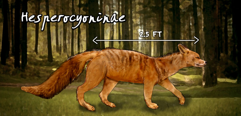 Hesperocyoninae