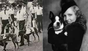 Left: Jacksonville Kennel Club