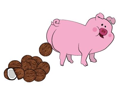 Pigs poop the equivalent of 10 coconuts per day. b6cd9bbc436e