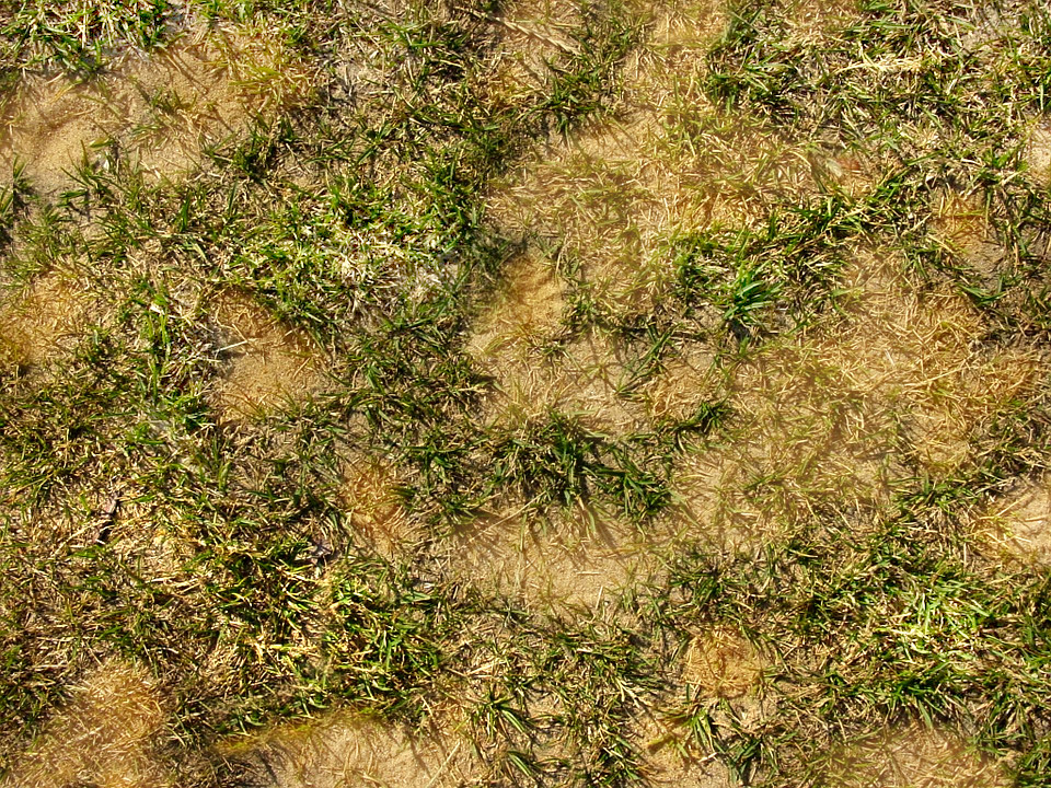 Dead patches on grass from dog urine