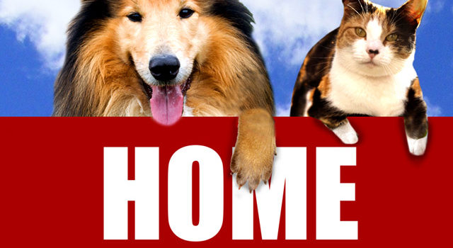 How to make buyers think you never had pets in your home