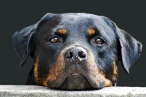 aging bladder in dog