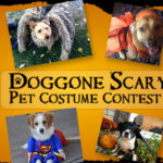 DOGGONE SCARY Online Pet Costume Contest | 2017