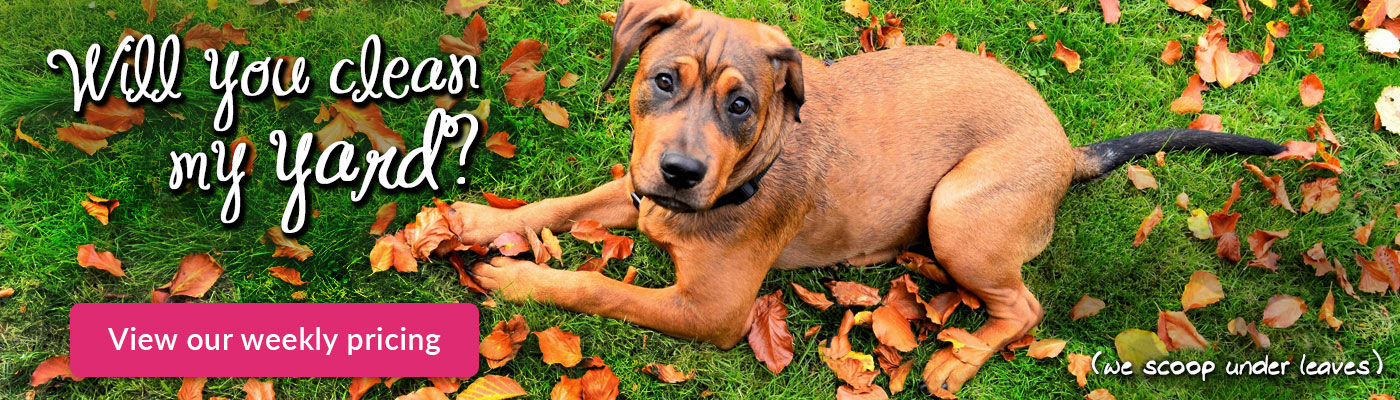 How To Start A Dog Waste Removal Service