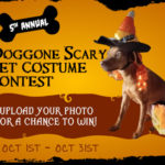DOGGONE SCARY Online Pet Costume Contest | 2019