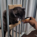 DIY Make a Cat Door in a Safety Gate That Small Dogs Can't Go Through