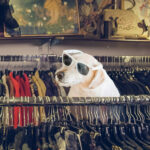 Shop Local Thrift Stores Run By Animal Shelters in Asheville & Hendersonville